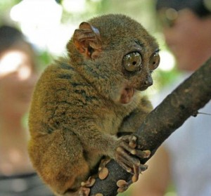 """This lemur is fascinated. """"Tell me more, O Wizard!"""""""