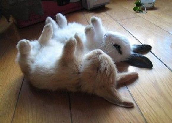rabbits-play-dead